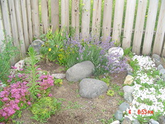 Garden view july 4,2005 005
