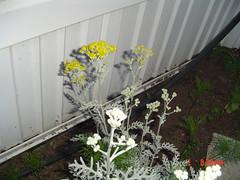 Garden view july 1,2005 007