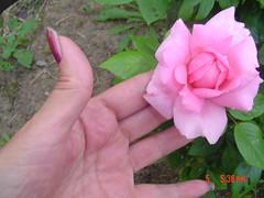 Garden view july 5,2005 009