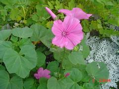 Garden view july 5,2005 010