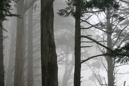 Muir Woods-01
