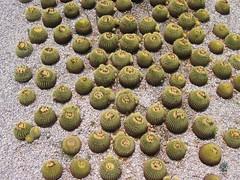 Cactus Garden | by RobK