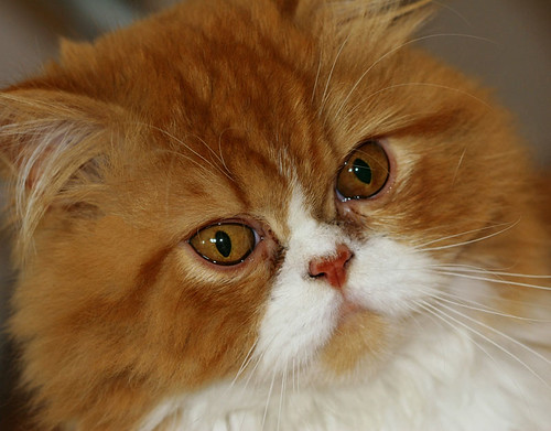 Isaac, my cat