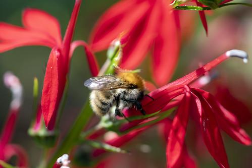 abeille 4 | by dalek_sat