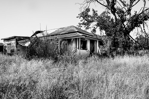 solemn d850 landscape bushes brush serious quiet tireswing california abandoned monochrome forgotten farm tree blackwhite creepy scary jamestown unitedstates us