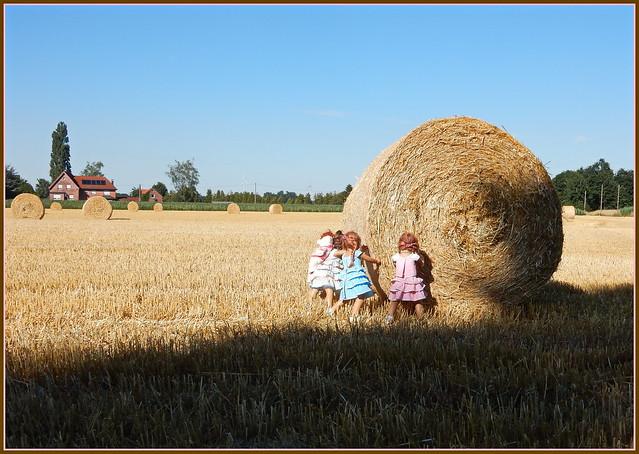 Kindergartenkinder als Erntehelferinnen ...