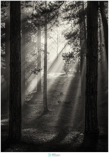 Light on Forest