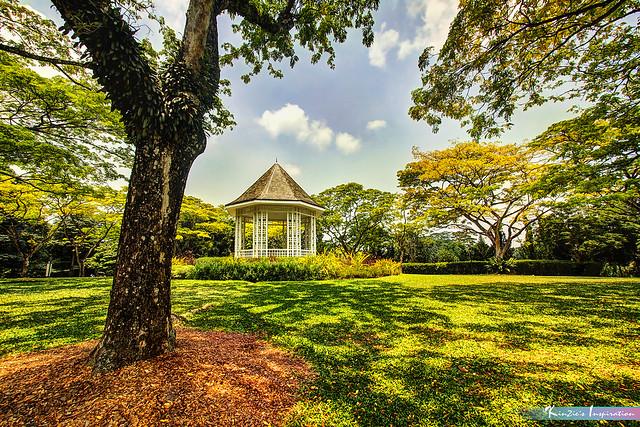 中午的陽光 l Afternoon Sunlight, Singapore Botanic Gardens *Corners of Singapore*