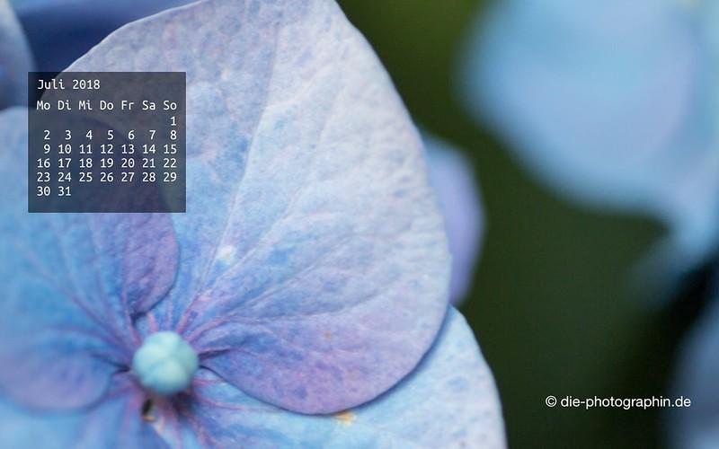 072018-hortensie-makro-wallpaperliebe-diephotographin