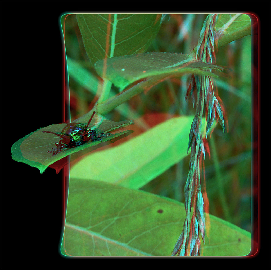 The Bane of My Existence - Anaglyph 3D