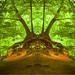 B(R)aum-Station :-) by Mara ~earth light~