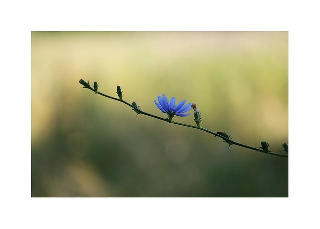 Little Lady Blue...
