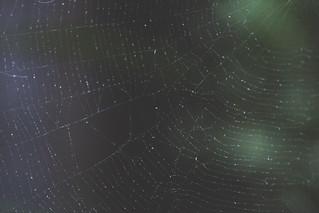 Spider Web | by Kassy O'Shea