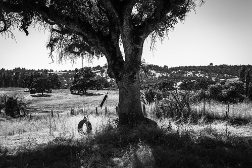 solemn d850 landscape bushes brush serious quiet tireswing tire california urban monochrome tree ropeswing blackwhite creepy abandoned forgotten farm fence jamestown unitedstates us