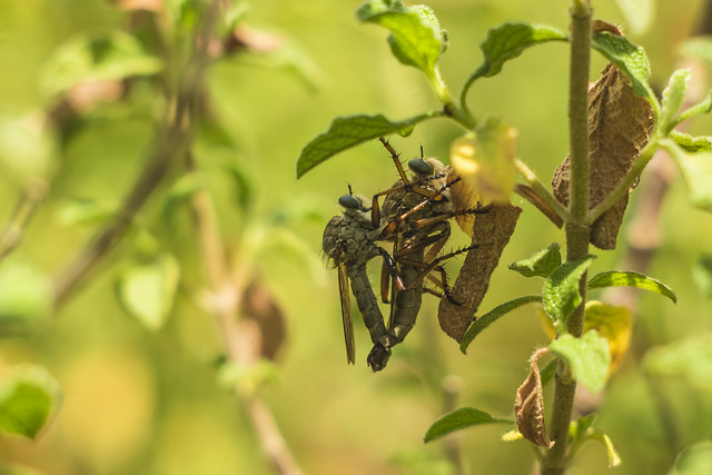 Friendly Flies : )