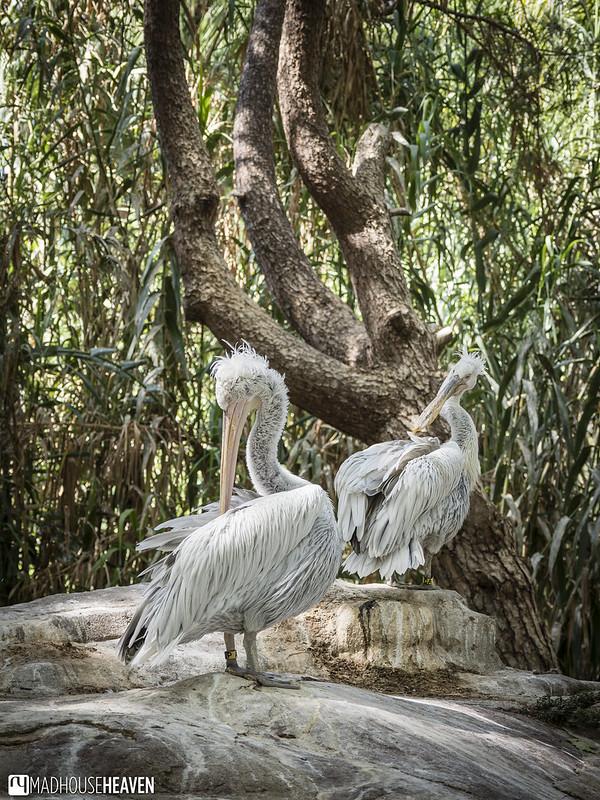 Barcelona Zoo - 0126