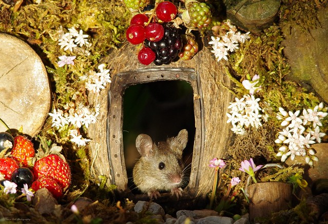 George the garden mouse