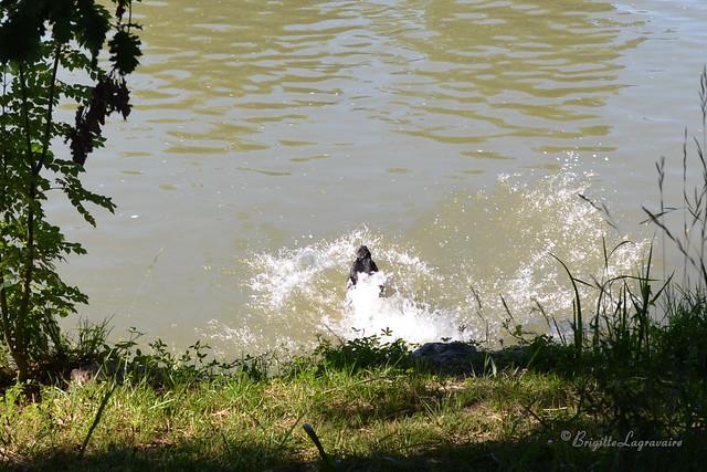 Splash ! wow, que c'est bon !
