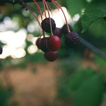20180714-203230 - Fruit Nature Bokeh