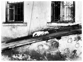sleeping dog | by Pomo photos