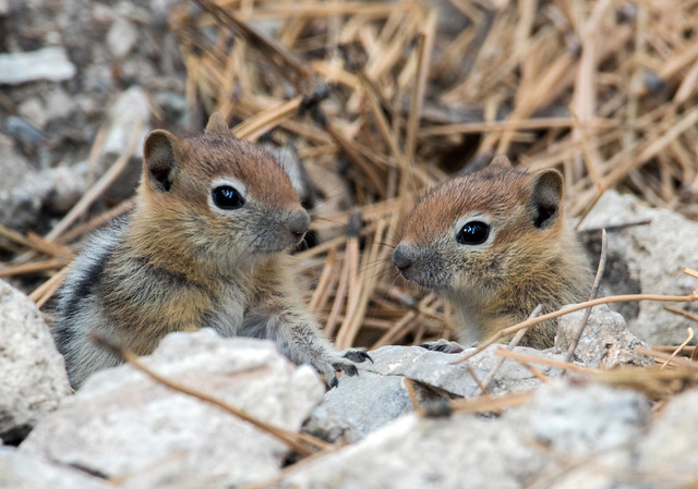 Young Groung Squirrels