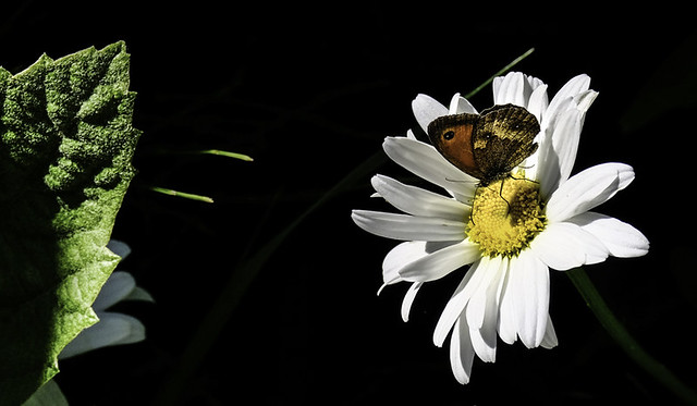 composition with a butterfly