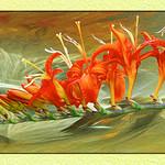 a flower fantasia