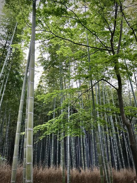 Ukyo-ku, bamboo forest