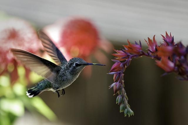Cactus nectar