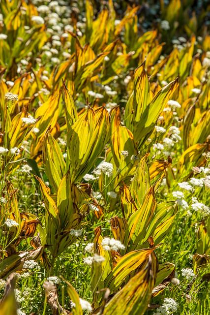Morning Light Through Wildflowers