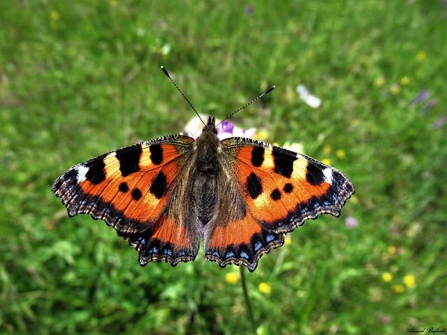 Butterfly 1694