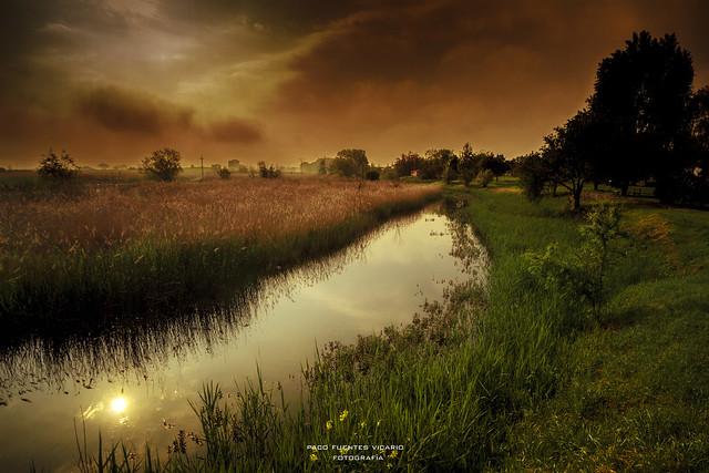 The Swamp / El pantano