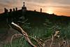 Maulbeerbaum-Wurzeln aus der Siedlerzeit