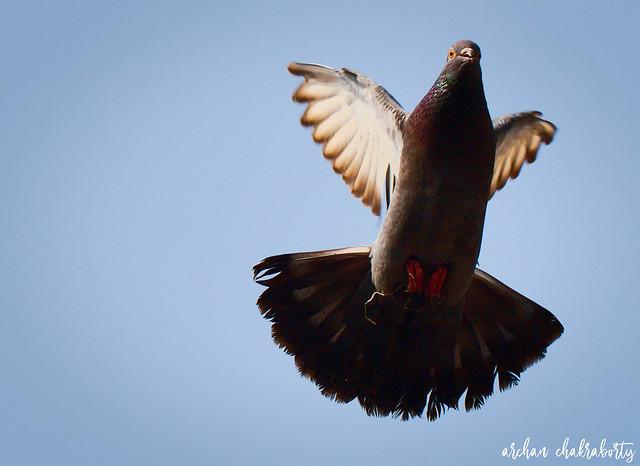 Dove Saying Hi! On The Way