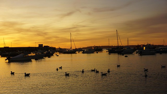 Gulls in the Harbour at Sunset