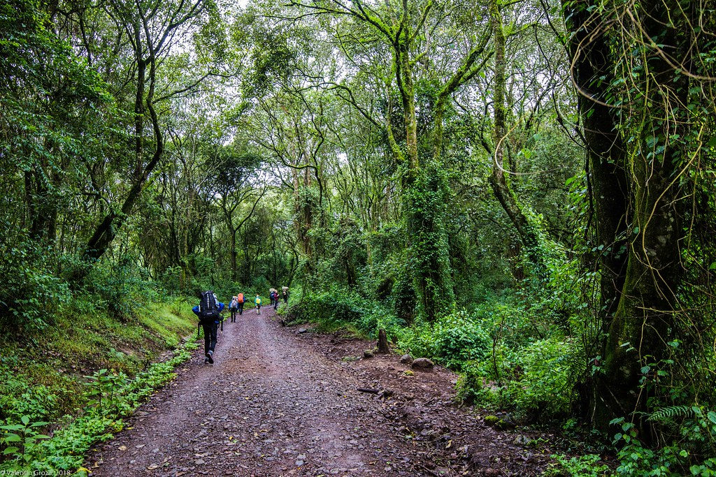 Kili_Machame_02_Jungla_Tanzania 2 iul18