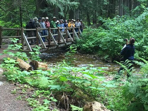 Bridge photo, Settler's Grove