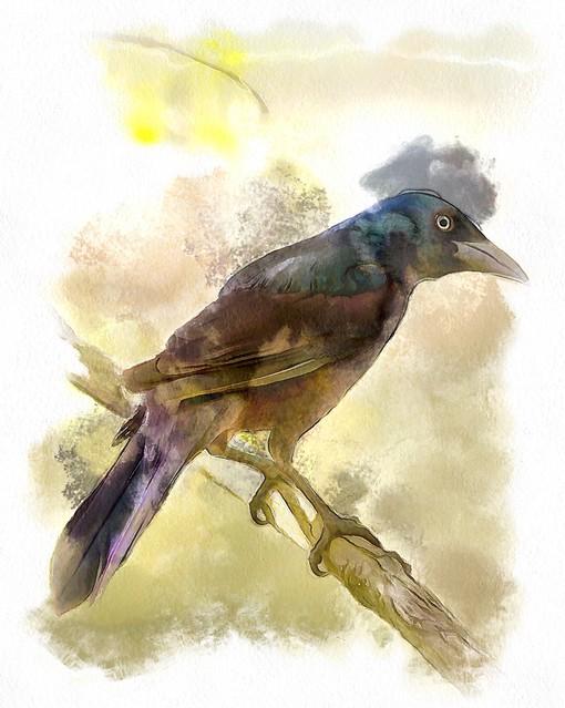 Common Grackle Watercolor
