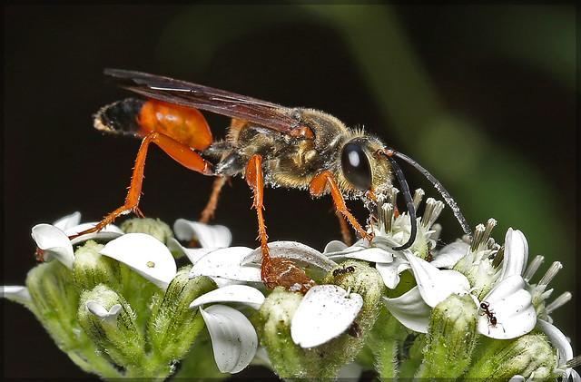 Wasp9622