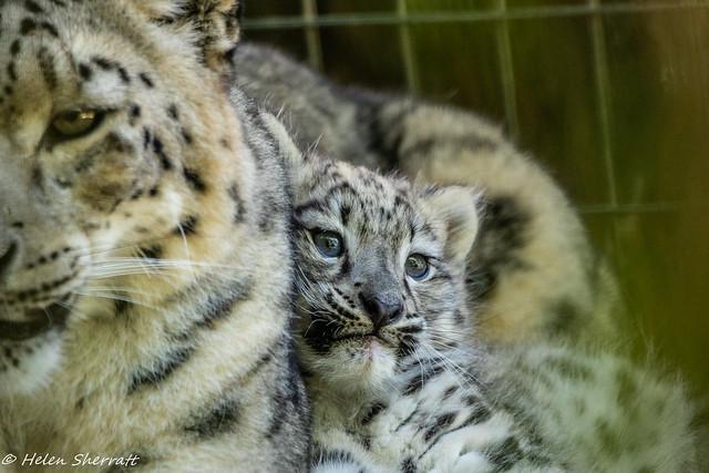 Snuggle with Mum (explored)