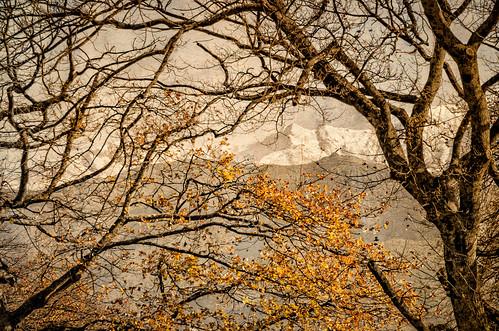 composite leaves florafauna landscape tree plants autumn texture mountain weather on1pics snow carterton wellington newzealand nz