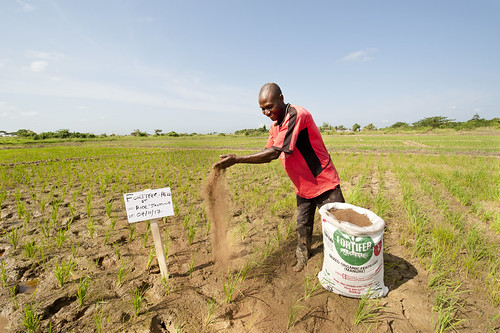 Farmer with a bag of fortifer in Kpong Irrigation Scheme, in Asutuare in Ghana.