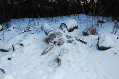 Deer - Day 16.2