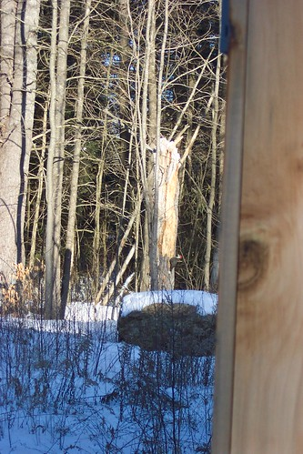 woodpecker alton 2007