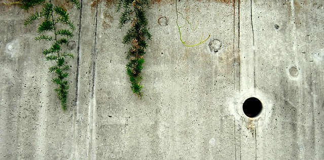 Weeds on Concrete Wall