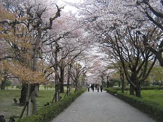 Nijo Castle - Kyoto | by Gavin Anderson