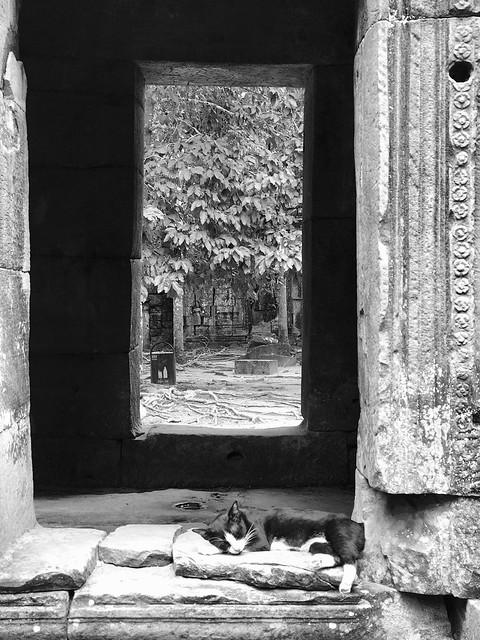 Temple Cat Nap