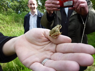 IRWC visits Turraun Wetlands, Co. Offaly, July 2013 | by Irish Ramsar Wetlands