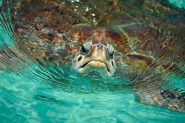 Sea Turtle - Cancun Mexico