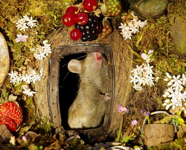 George the mouse in a log pile house standing at door (2)